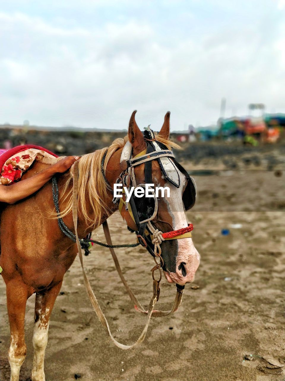 mammal, domestic, domestic animals, pets, animal, animal themes, livestock, vertebrate, horse, group of animals, land, working animal, animal wildlife, bridle, cloud - sky, two animals, day, brown, nature, sky, outdoors, herbivorous, ranch, animal head