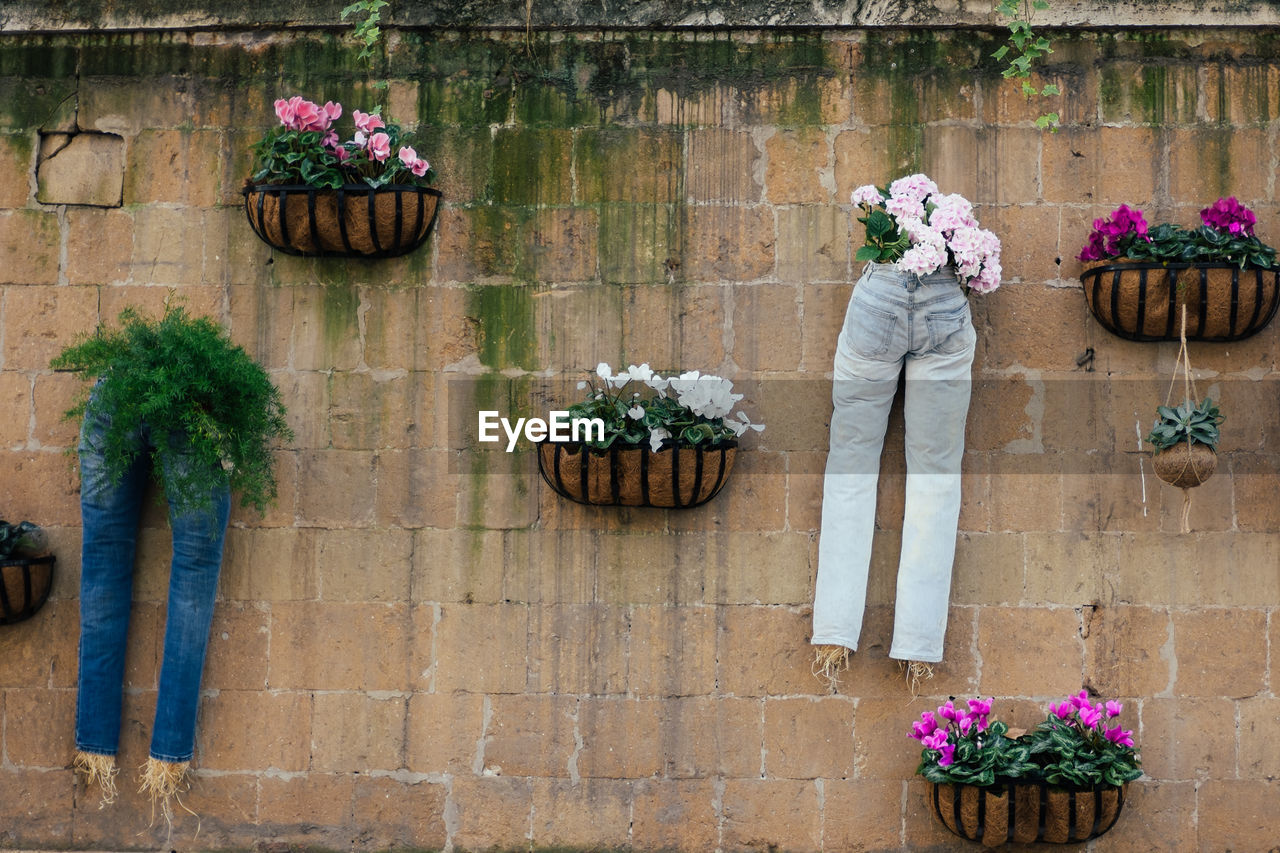 flower, plant, flowering plant, nature, potted plant, flower pot, growth, day, architecture, people, adult, freshness, women, building exterior, standing, outdoors, beauty in nature, wall, full length, bouquet, brick, flower arrangement, flower head, purple