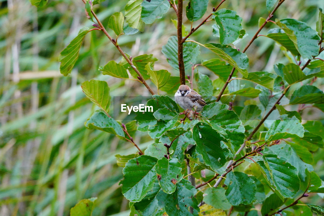 animal, animal themes, one animal, leaf, plant, green color, plant part, animal wildlife, animals in the wild, growth, vertebrate, nature, tree, no people, focus on foreground, day, bird, beauty in nature, branch, close-up, outdoors