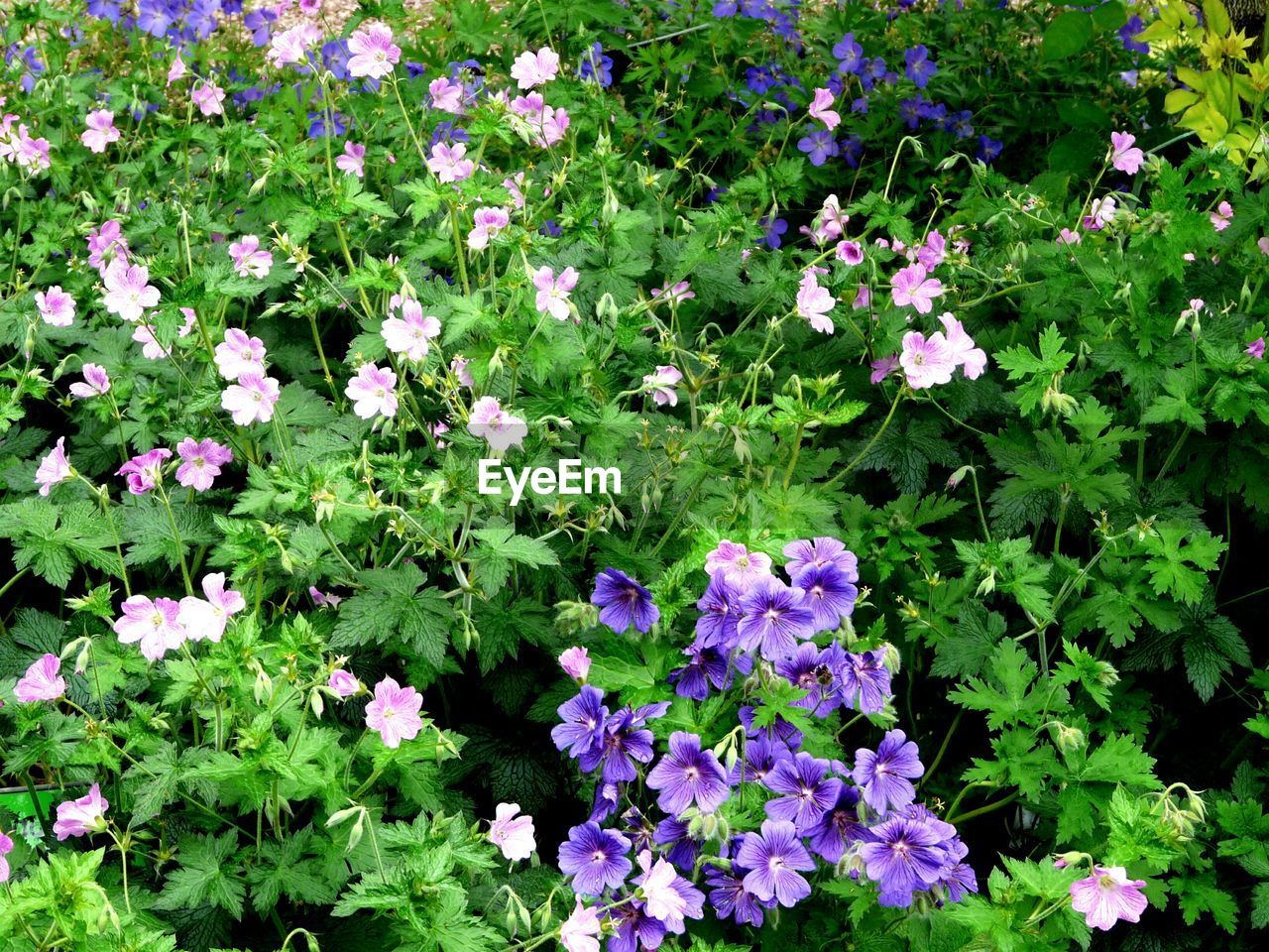 Full Frame View Of Flowers With Leaves