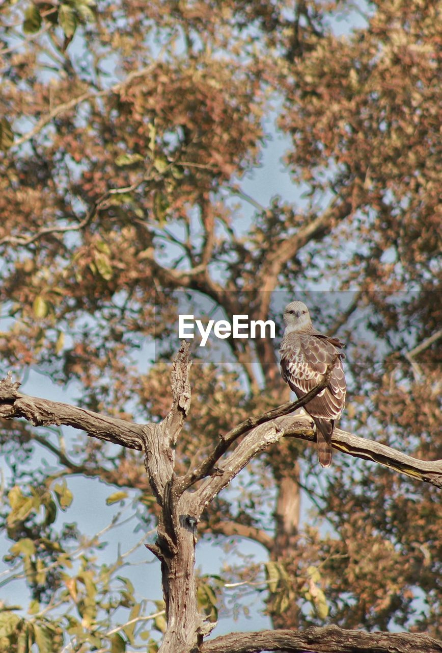 tree, animals in the wild, animal wildlife, low angle view, animal, bird, branch, animal themes, vertebrate, plant, perching, one animal, focus on foreground, bird of prey, nature, day, no people, sky, outdoors, beauty in nature, eagle