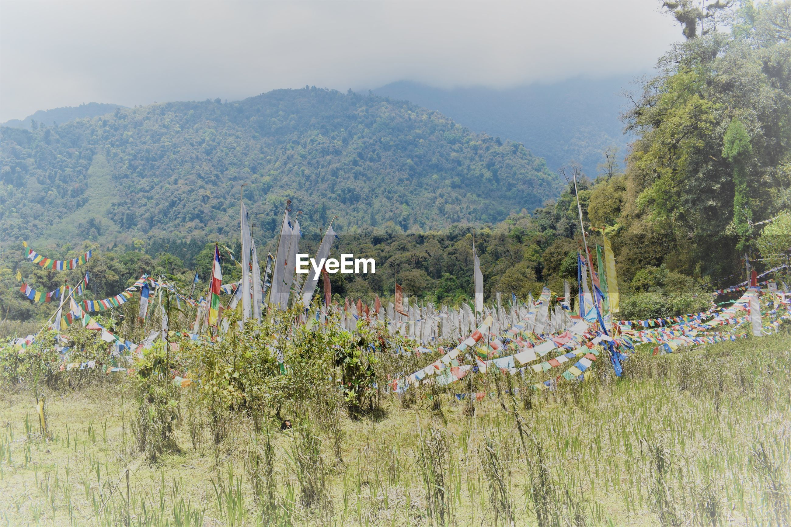 Plants growing on field against mountains