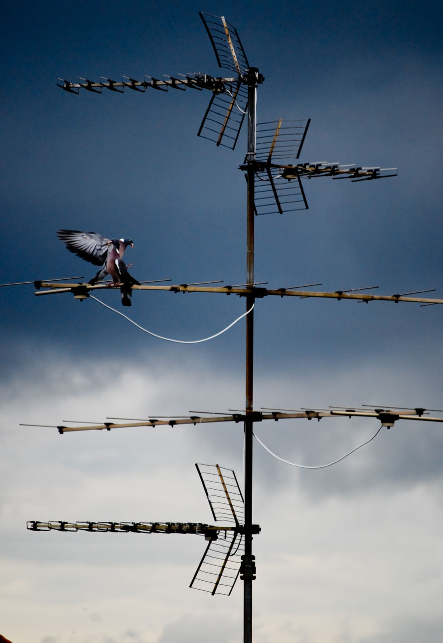 bird, sky, vertebrate, animal themes, animals in the wild, animal wildlife, animal, antenna - aerial, cable, perching, technology, electricity, day, nature, low angle view, connection, communication, no people, one animal, telecommunications equipment, outdoors, power supply, telephone line
