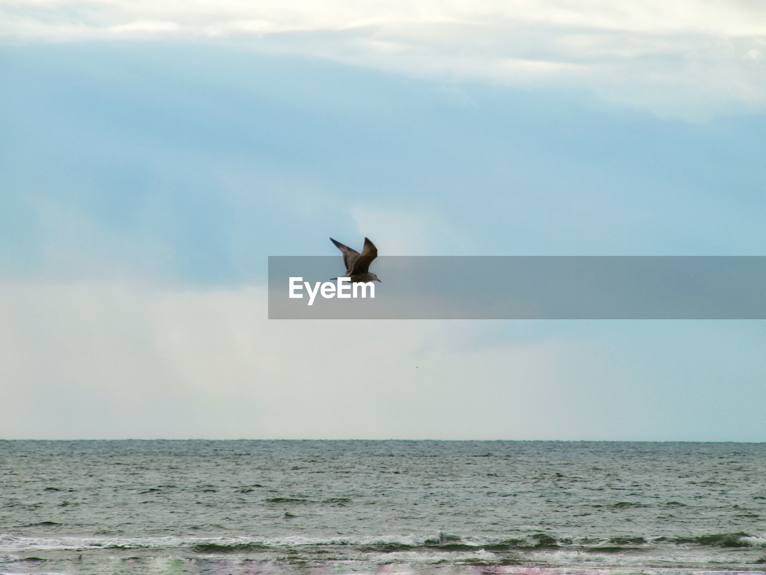 SEAGULL FLYING OVER CALM SEA