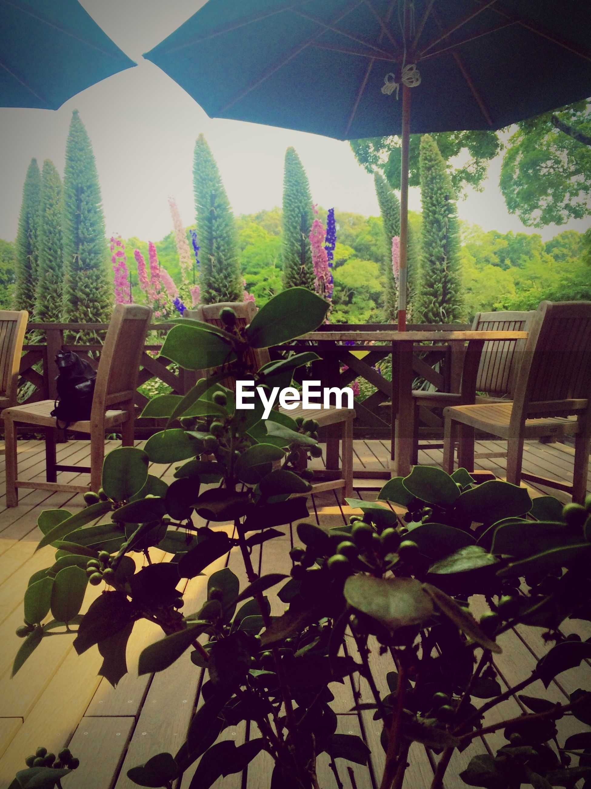 growth, plant, leaf, sunlight, potted plant, green color, built structure, nature, architecture, indoors, growing, freshness, day, sky, front or back yard, tree, beauty in nature, house, low angle view, no people