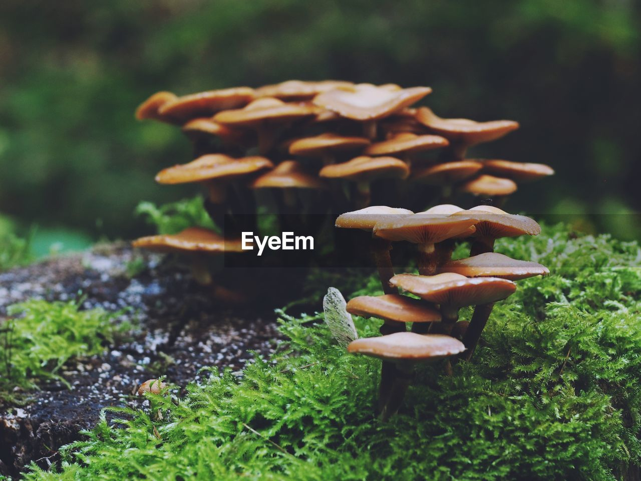 food, vegetable, mushroom, growth, no people, close-up, freshness, fungus, food and drink, toadstool, plant, focus on foreground, day, nature, green color, beauty in nature, field, land, edible mushroom, selective focus, surface level, snack