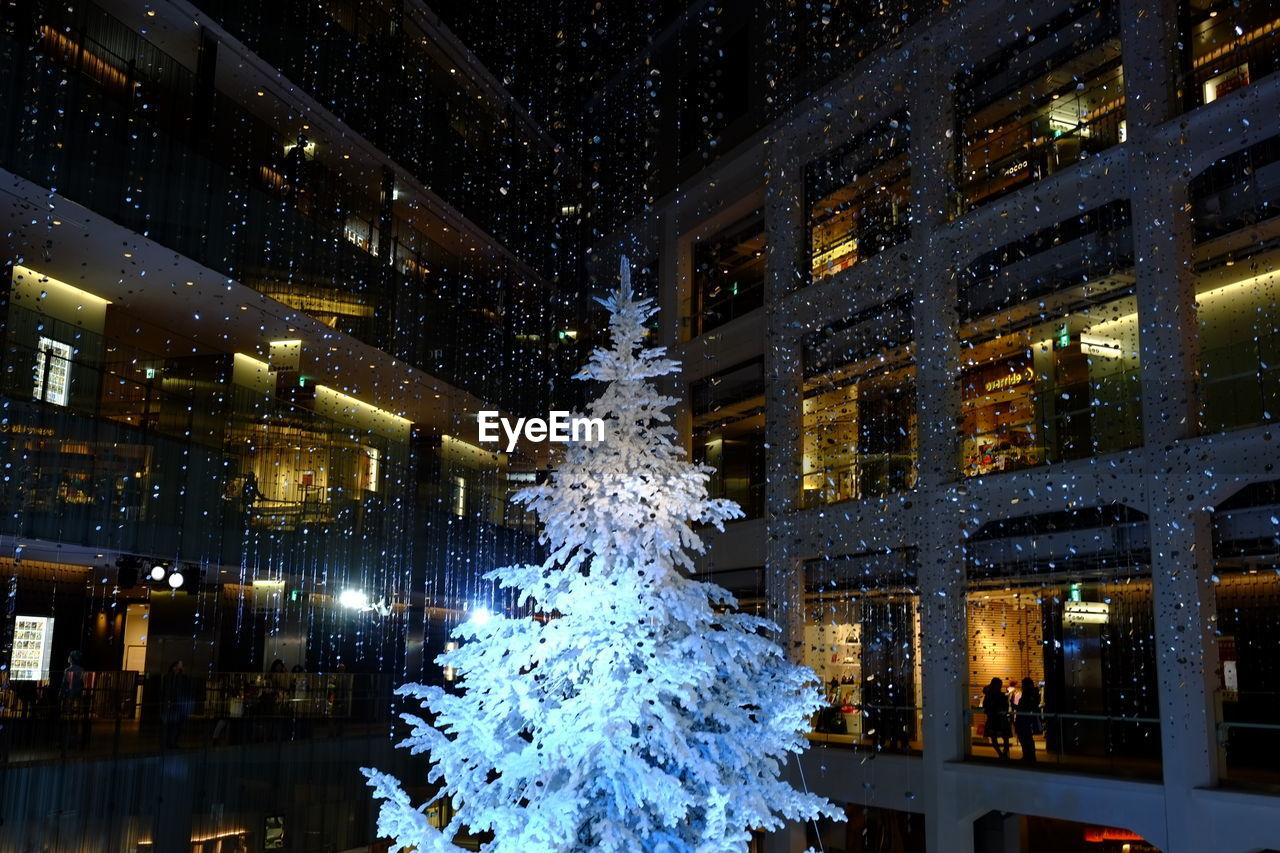 Christmas Tree Against Buildings At Night