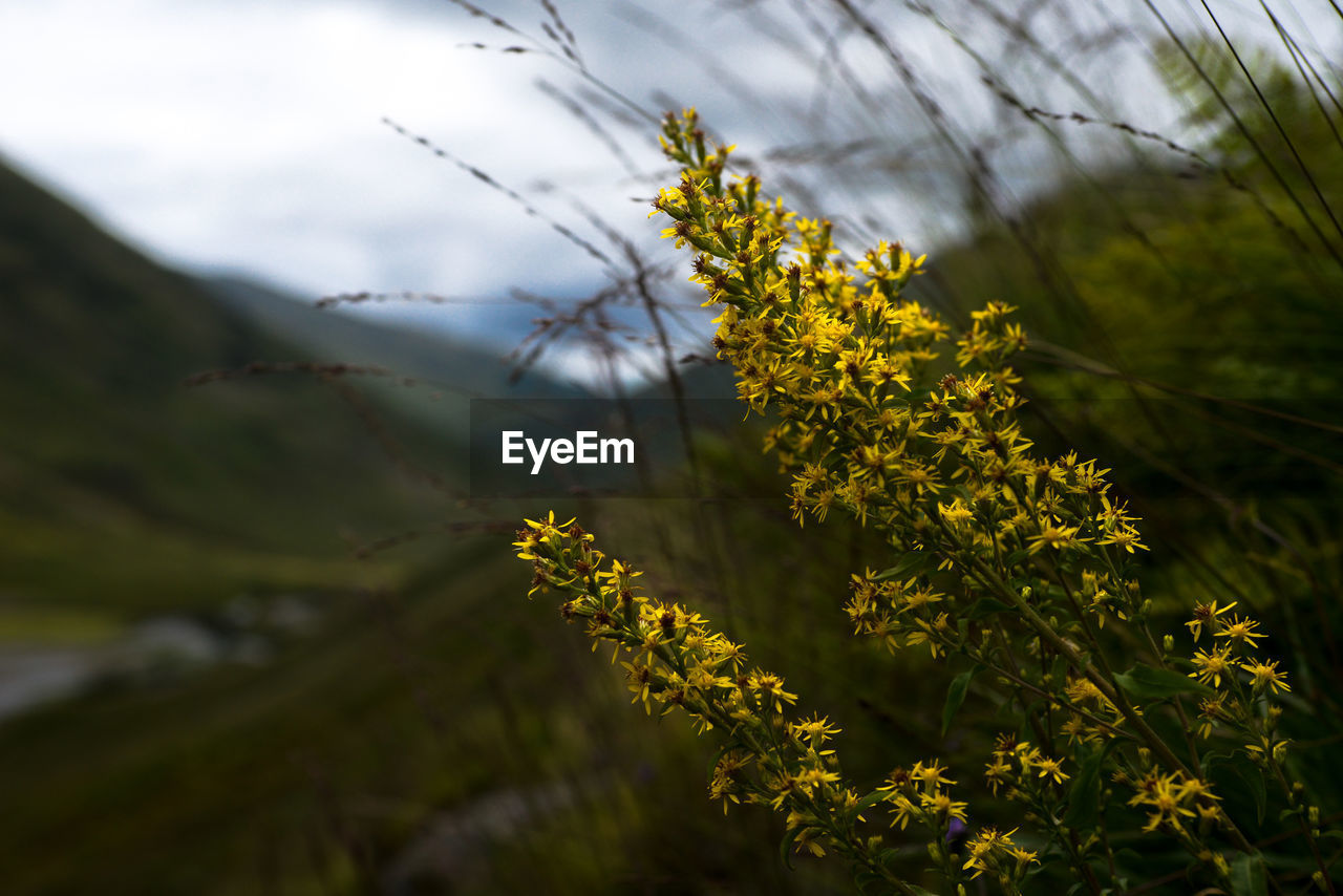 plant, beauty in nature, yellow, growth, flower, flowering plant, fragility, nature, vulnerability, no people, day, freshness, close-up, tranquility, selective focus, sky, outdoors, land, tree, field