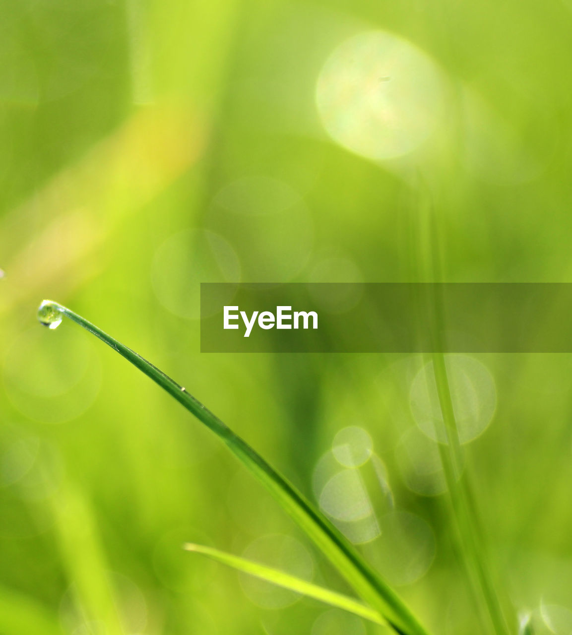 green color, plant, growth, nature, selective focus, beauty in nature, close-up, no people, grass, freshness, day, water, outdoors, field, focus on foreground, tranquility, drop, land, sunlight, blade of grass, lens flare, dew