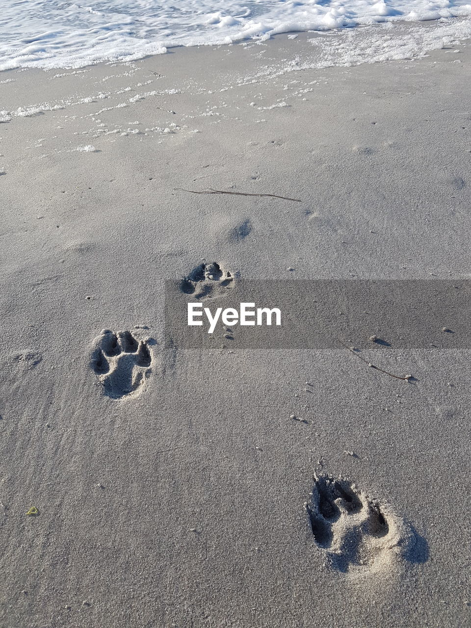 land, beach, sand, high angle view, footprint, nature, paw print, day, no people, print, track - imprint, sea, water, animal track, outdoors, absence, animal, tranquility, animal themes