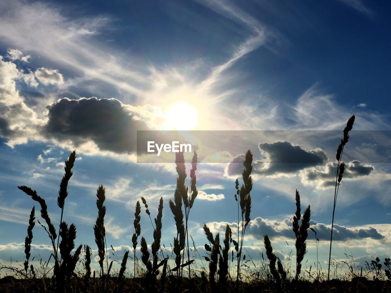 sky, cloud - sky, beauty in nature, sunlight, tranquility, sun, plant, nature, sunbeam, tranquil scene, lens flare, growth, silhouette, scenics - nature, sunset, no people, field, day, non-urban scene, land, bright, streaming