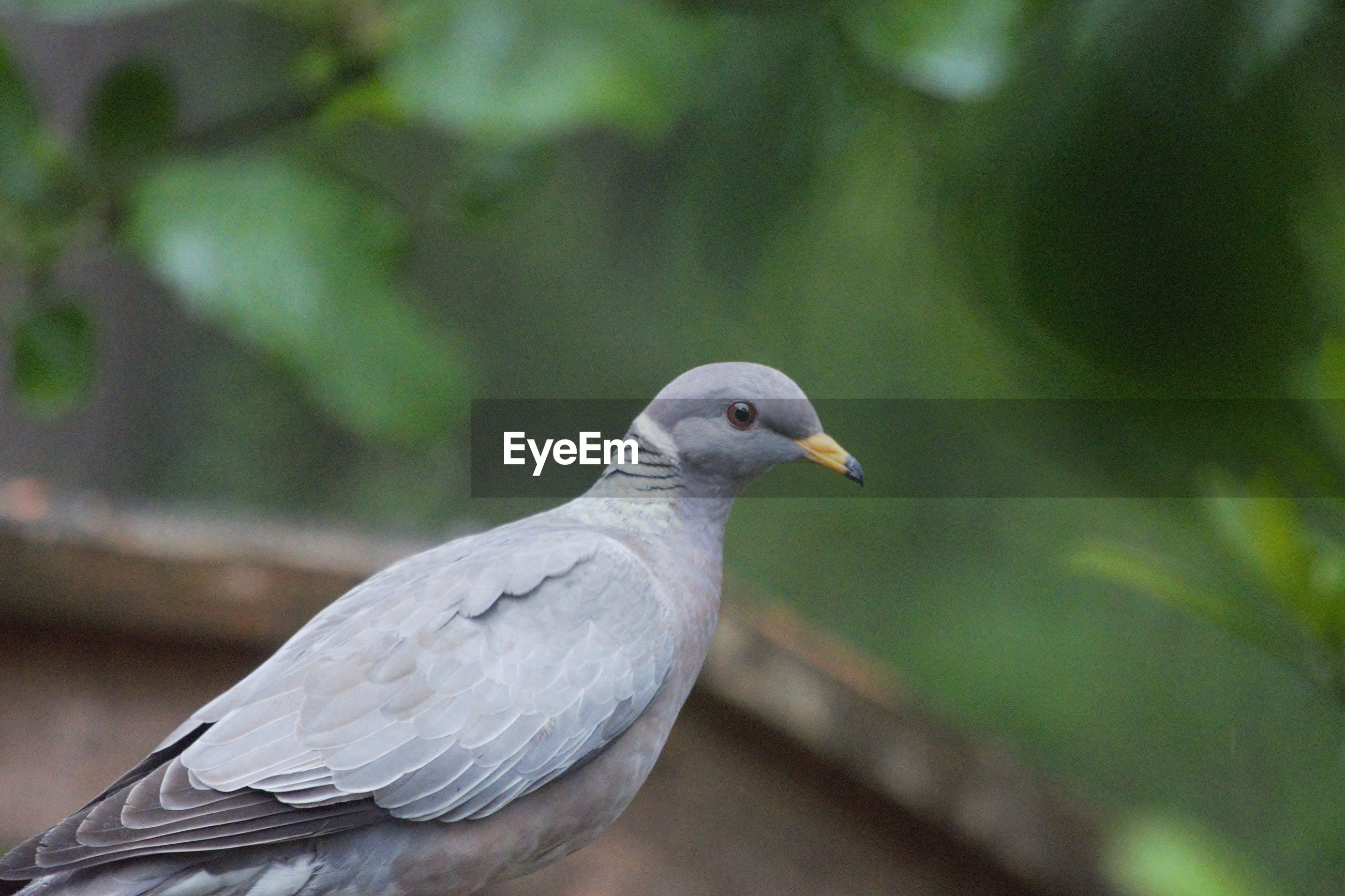 CLOSE-UP OF PIGEON PERCHING ON A PLANT