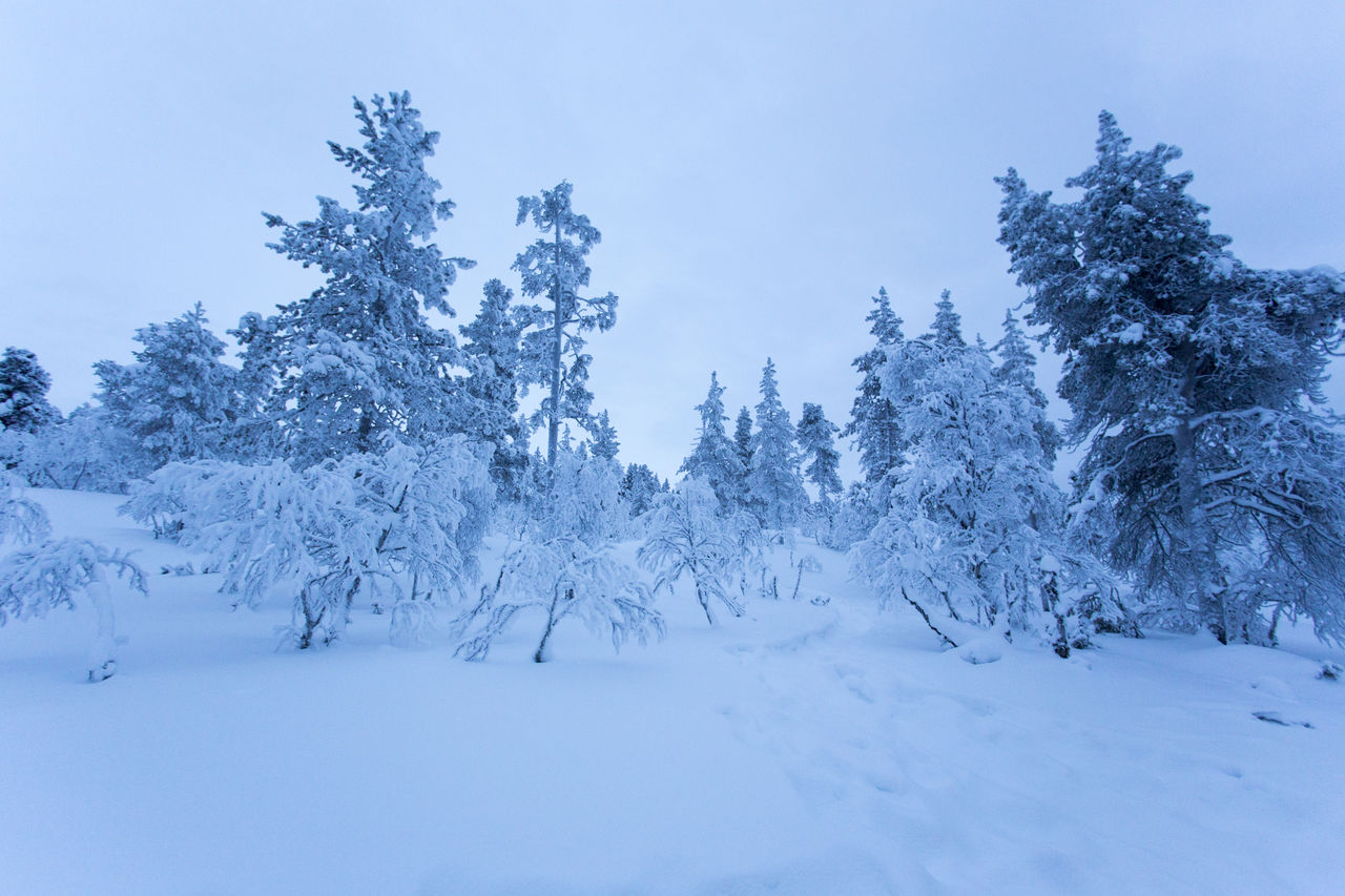 snow, cold temperature, winter, tree, plant, beauty in nature, white color, tranquility, covering, tranquil scene, sky, nature, scenics - nature, land, no people, day, field, environment, deep snow, coniferous tree, powder snow