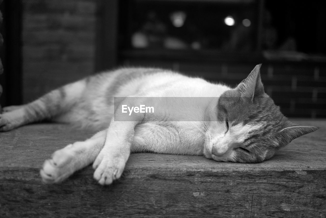 domestic, pets, relaxation, cat, feline, domestic animals, mammal, one animal, animal, domestic cat, animal themes, resting, vertebrate, lying down, eyes closed, sleeping, no people, close-up, indoors, focus on foreground, flooring, whisker, napping