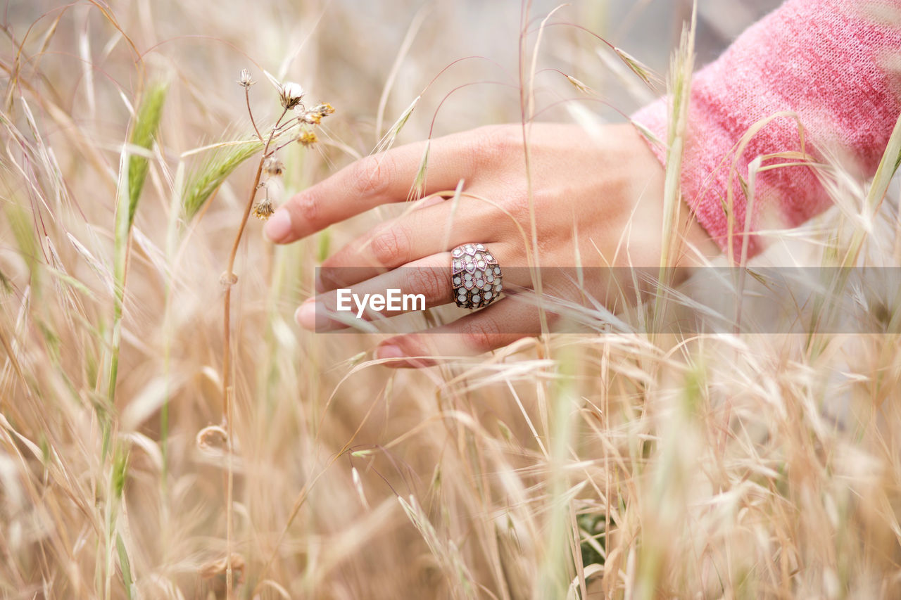 MIDSECTION OF WOMAN HOLDING CROPS