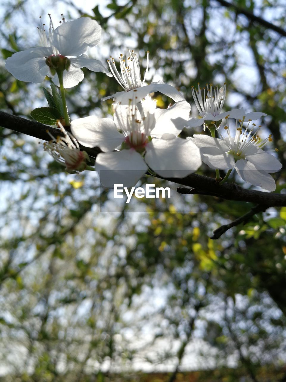 flowering plant, plant, flower, growth, fragility, tree, beauty in nature, vulnerability, freshness, branch, blossom, springtime, low angle view, petal, day, nature, white color, no people, pollen, twig, flower head, outdoors, cherry blossom, cherry tree, spring