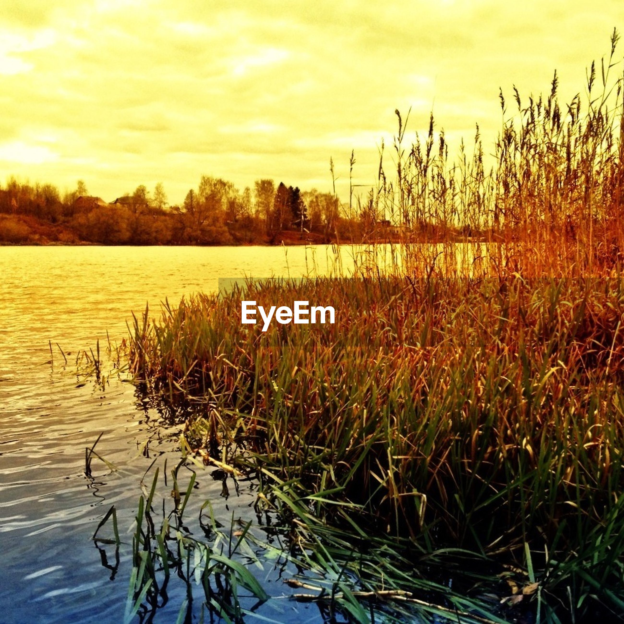 sunset, sky, water, tranquility, tranquil scene, grass, beauty in nature, lake, plant, nature, scenics, growth, cloud - sky, reflection, cloud, idyllic, cloudy, outdoors, no people, field