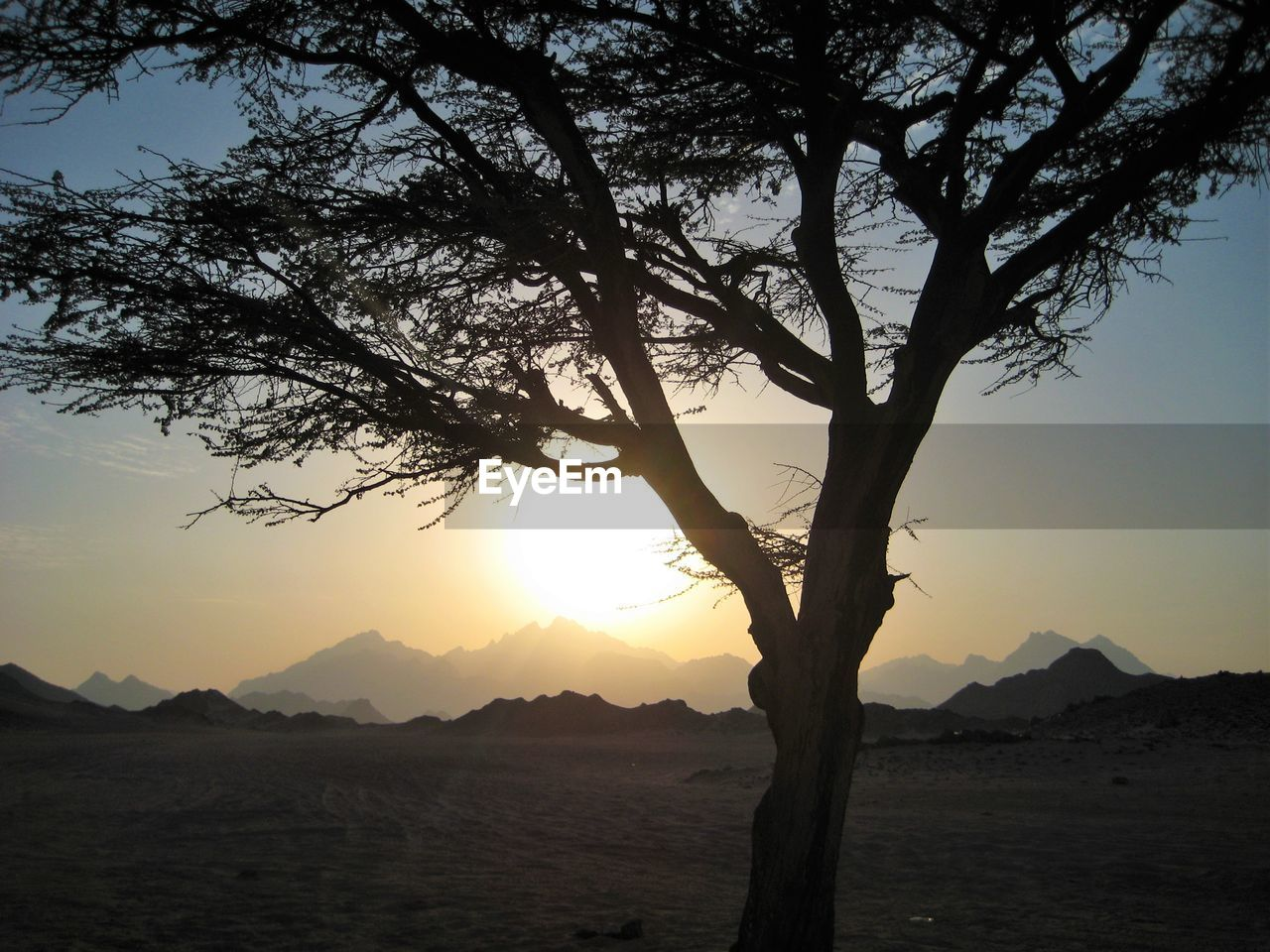 Silhouette Of Trees In Front Of Mountains During Sunset