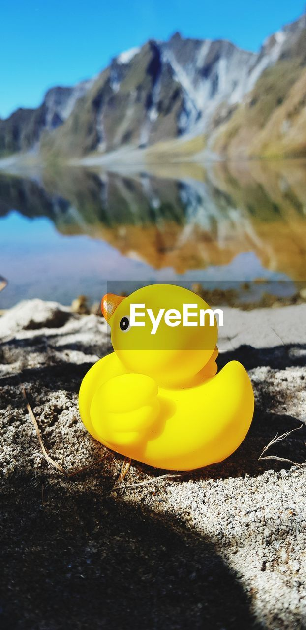 yellow, water, rubber duck, nature, close-up, toy, animal, no people, sea, day, animal themes, animal representation, rock, representation, solid, focus on foreground, animal wildlife, beauty in nature, outdoors, floating on water, marine