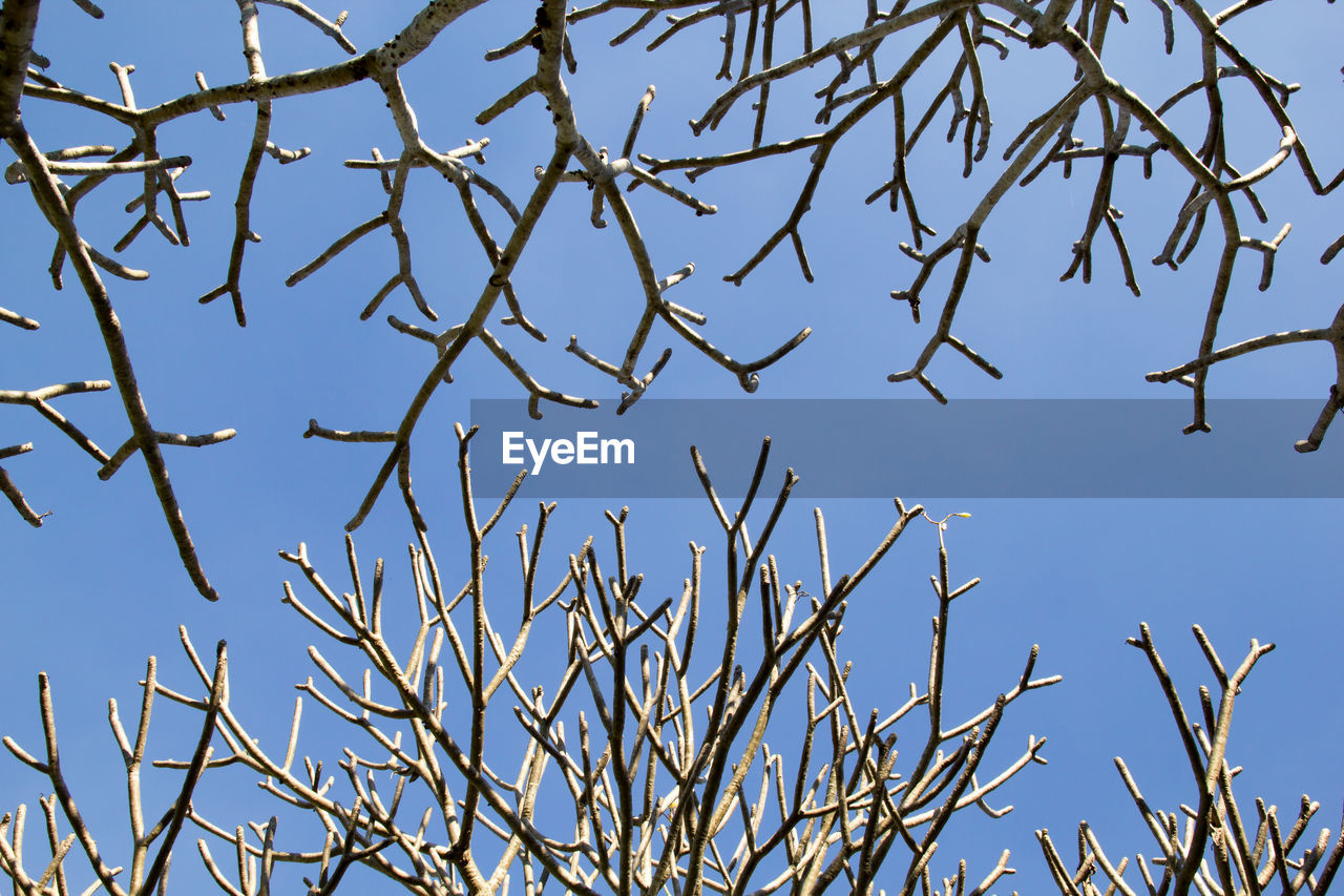 sky, no people, low angle view, blue, clear sky, plant, nature, beauty in nature, branch, tree, day, tranquility, growth, bare tree, outdoors, twig, close-up, sunlight, scenics - nature, dry