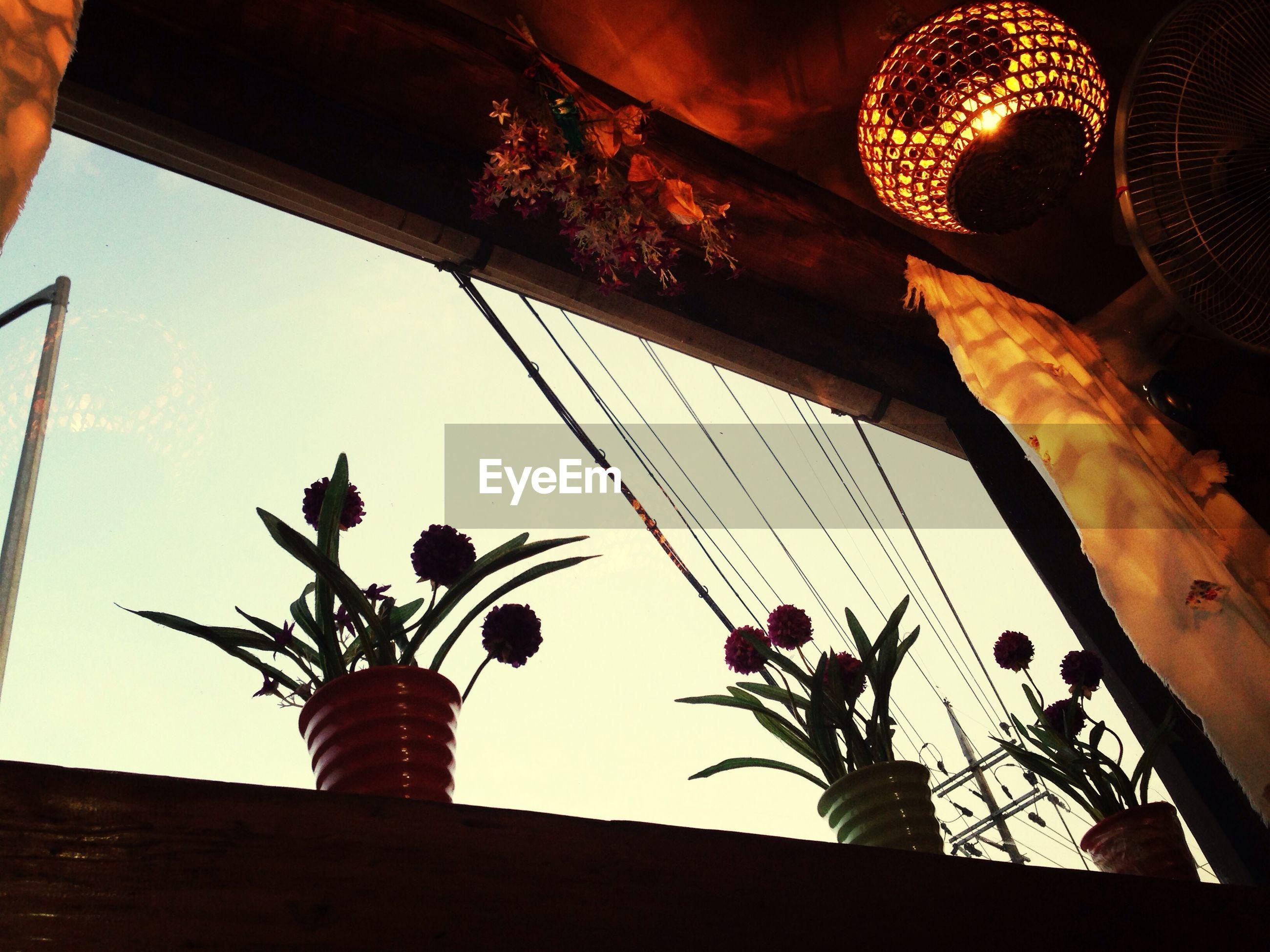 Flower pot on window sill against clear sky