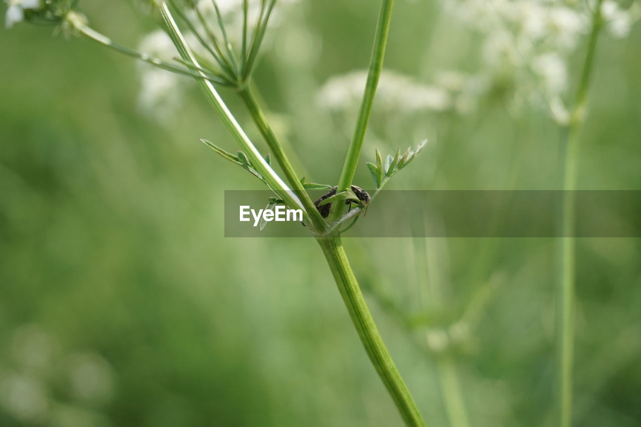 plant, green color, growth, close-up, nature, one animal, animals in the wild, day, animal, focus on foreground, animal wildlife, animal themes, no people, invertebrate, selective focus, insect, beauty in nature, plant part, leaf, plant stem, outdoors, blade of grass