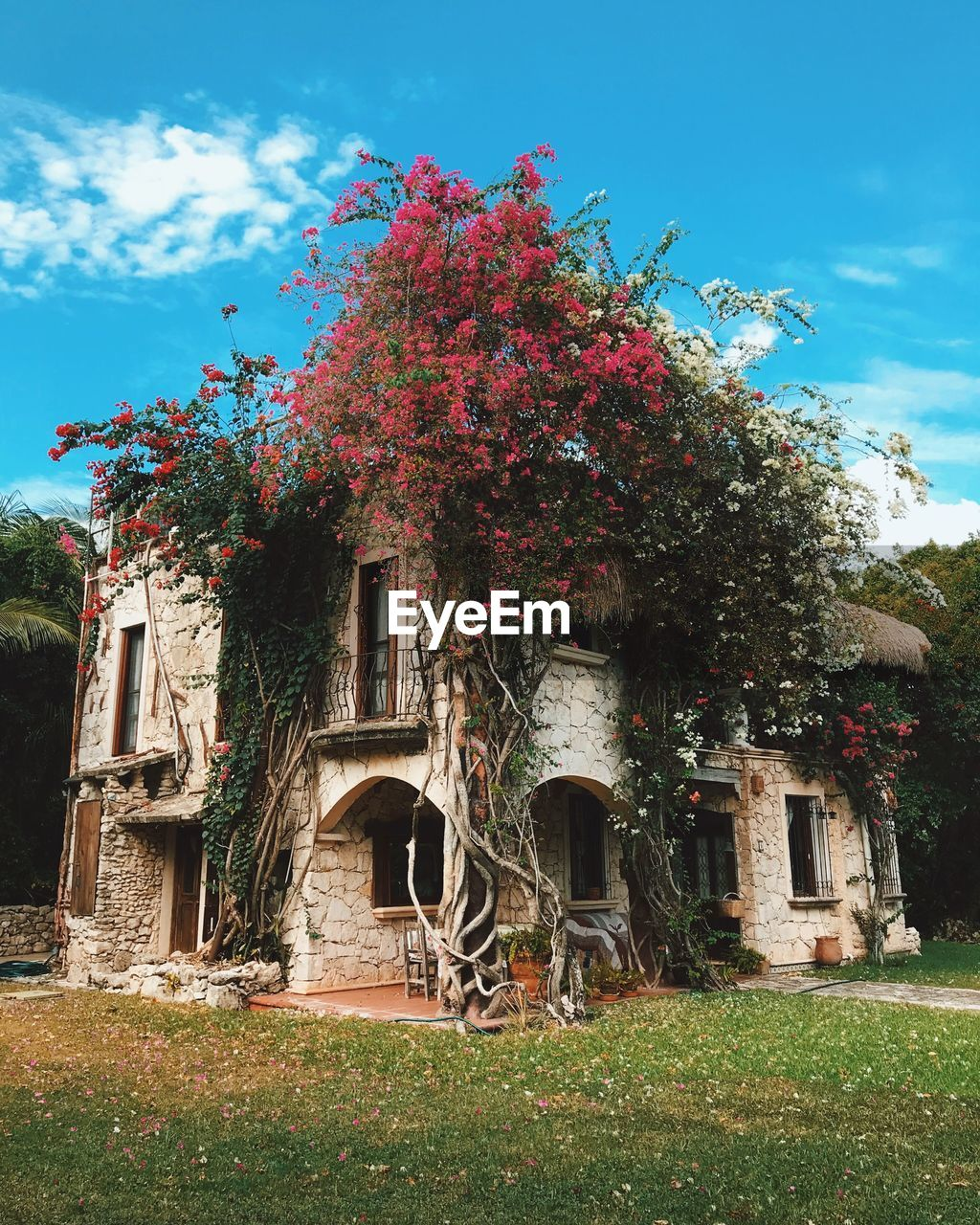 plant, built structure, architecture, nature, sky, growth, flower, flowering plant, tree, building exterior, grass, building, day, cloud - sky, no people, outdoors, beauty in nature, low angle view, front or back yard, house