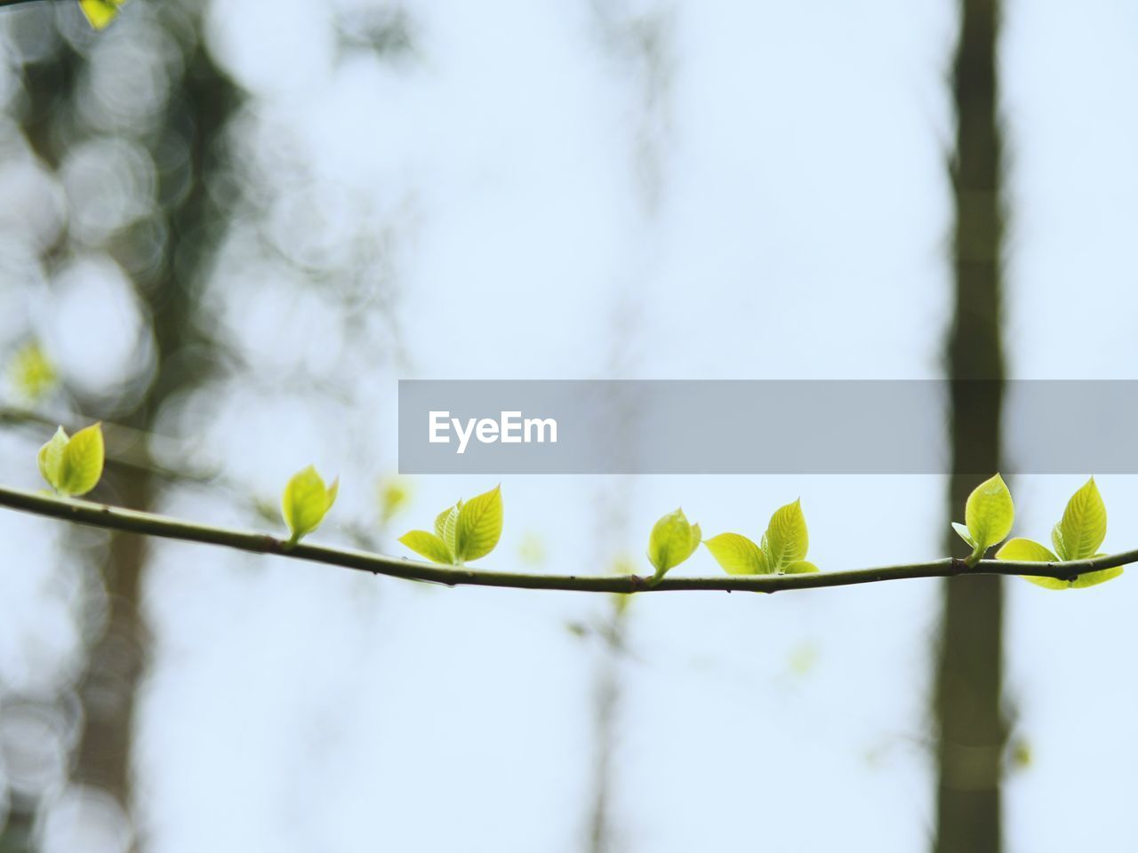 plant, growth, leaf, plant part, nature, beauty in nature, focus on foreground, green color, no people, day, low angle view, close-up, tree, fragility, outdoors, tranquility, vulnerability, twig, freshness, selective focus, leaves