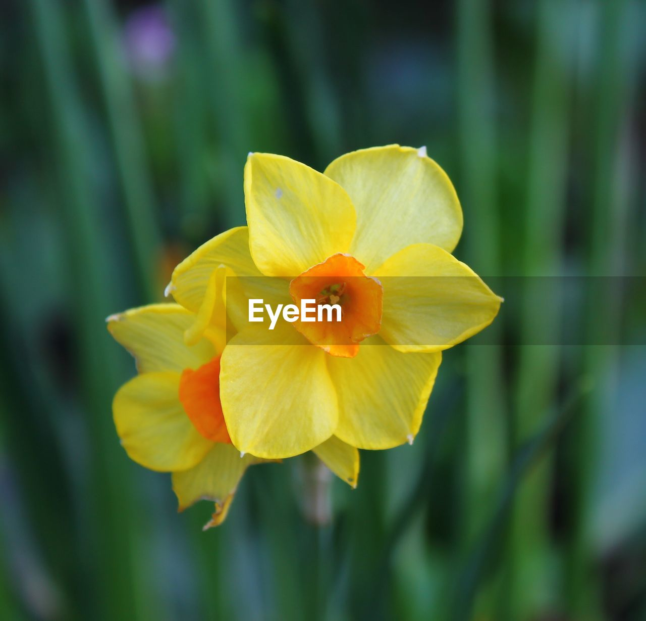 flower, petal, freshness, fragility, nature, growth, beauty in nature, flower head, focus on foreground, plant, yellow, close-up, blooming, no people, day, outdoors, green color