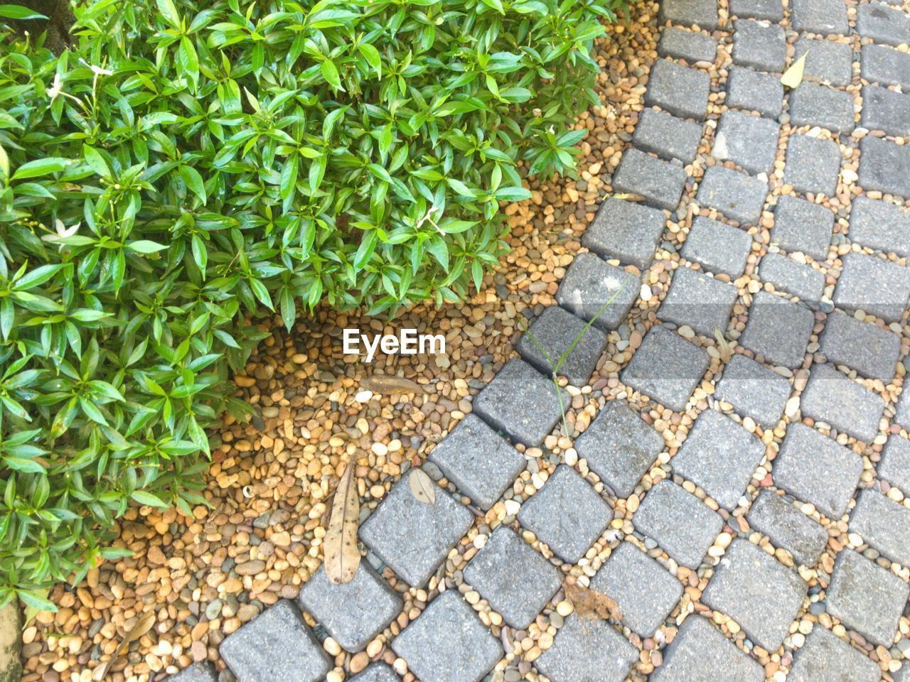 leaf, cobblestone, outdoors, day, nature, plant, growth, no people, close-up
