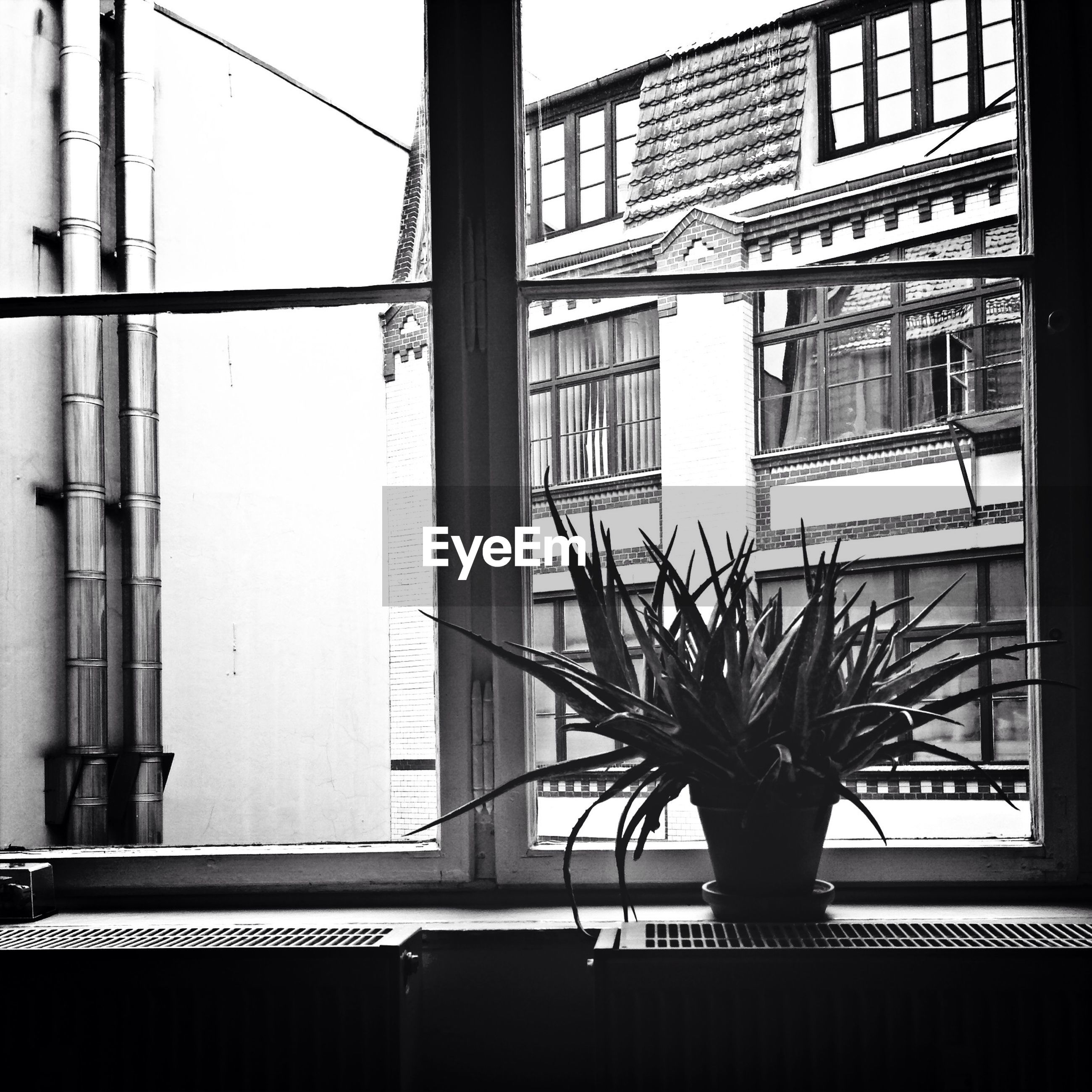 View of potted plant on window sill