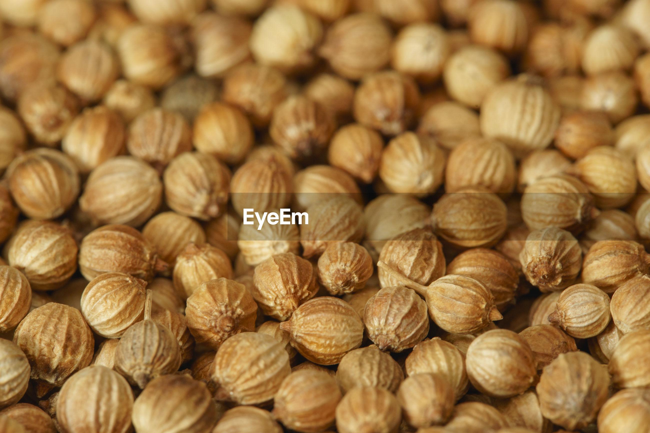 Coriander cilantro seeds close-up