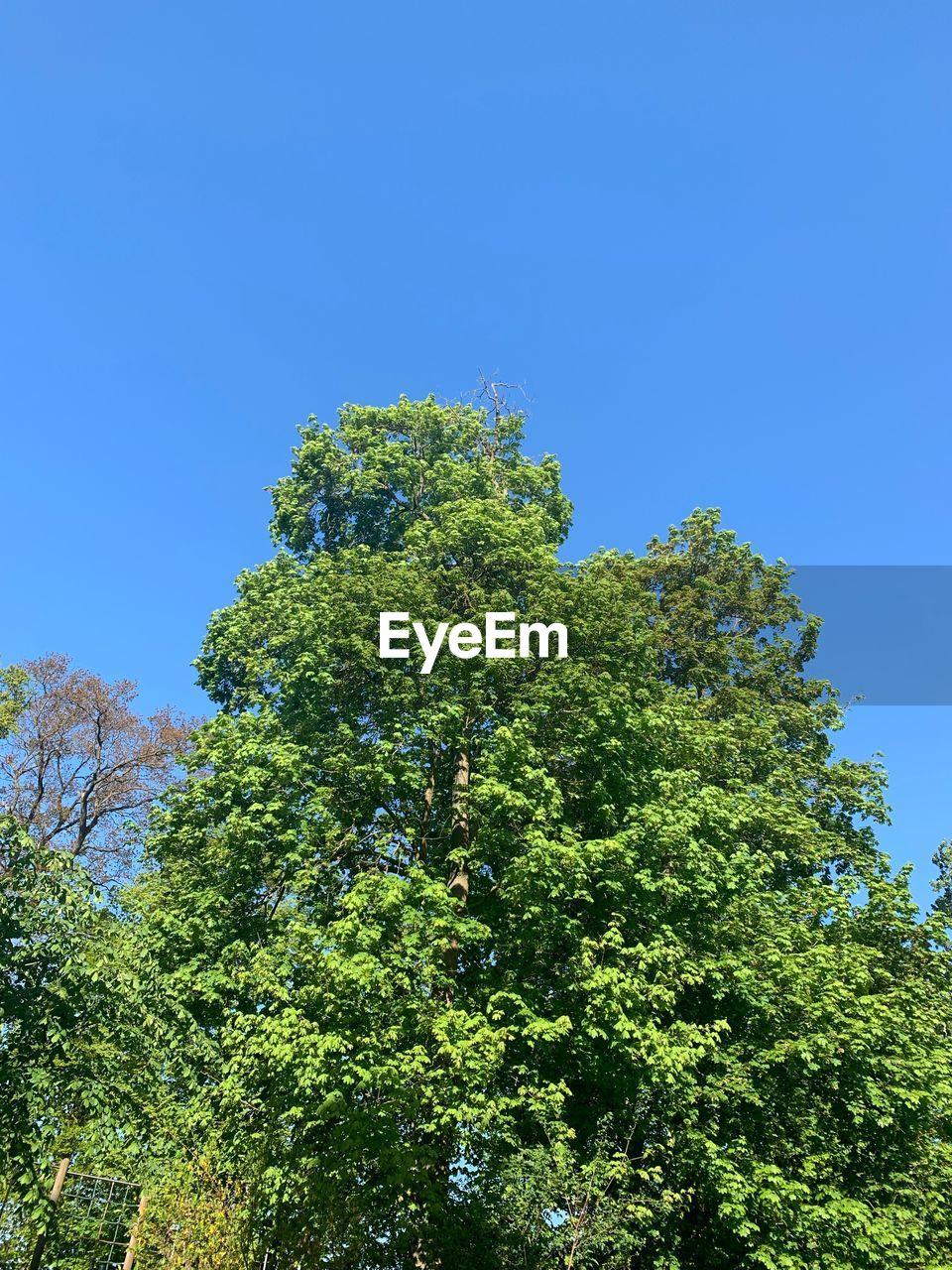 tree, plant, sky, growth, green color, low angle view, clear sky, beauty in nature, no people, nature, tranquility, day, blue, outdoors, copy space, foliage, sunlight, tranquil scene, lush foliage, scenics - nature