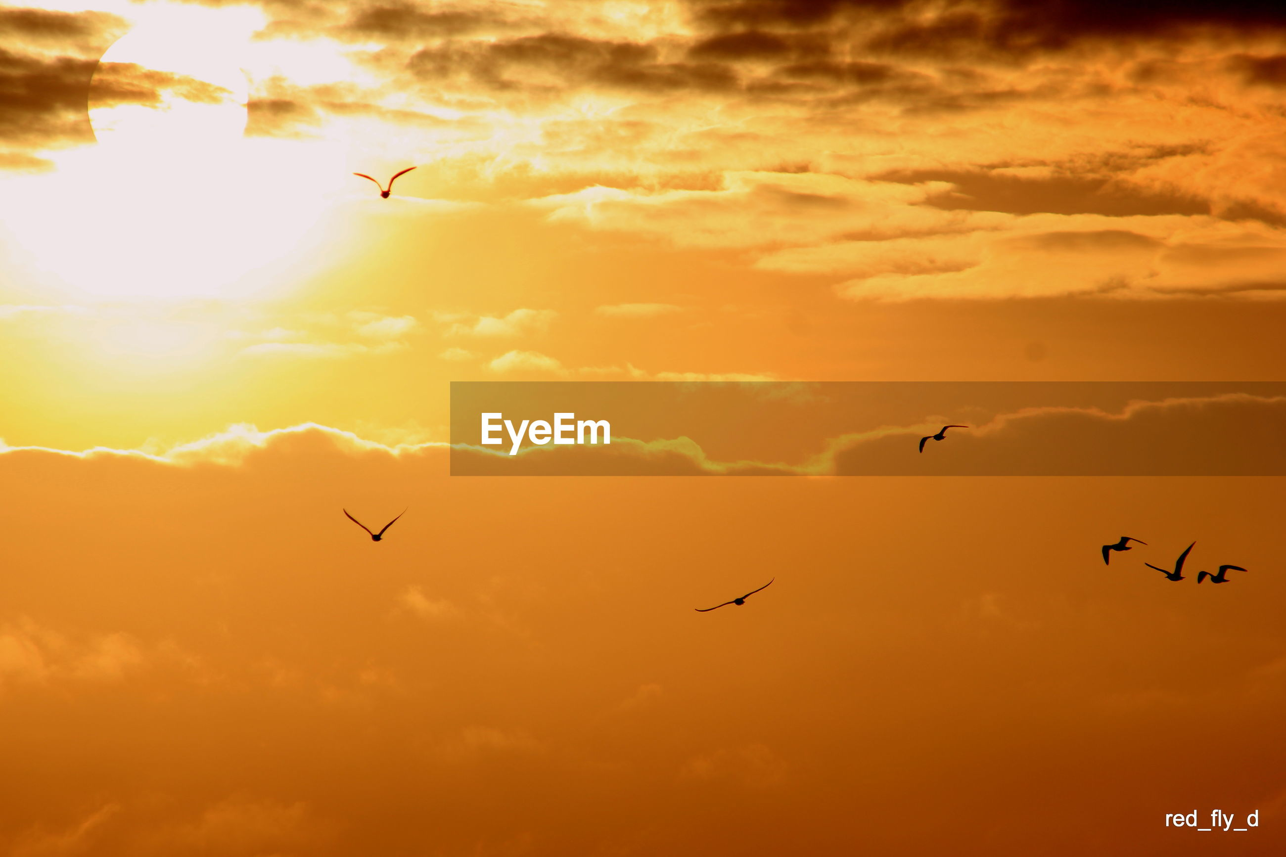 flying, bird, animal themes, animals in the wild, wildlife, sunset, low angle view, sky, mid-air, silhouette, cloud - sky, spread wings, flock of birds, orange color, beauty in nature, nature, cloud, sun, medium group of animals