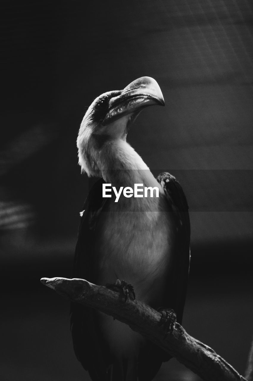 bird, vertebrate, animal wildlife, animals in the wild, one animal, focus on foreground, no people, perching, close-up, day, nature, beak, outdoors, branch, looking away, looking, zoology