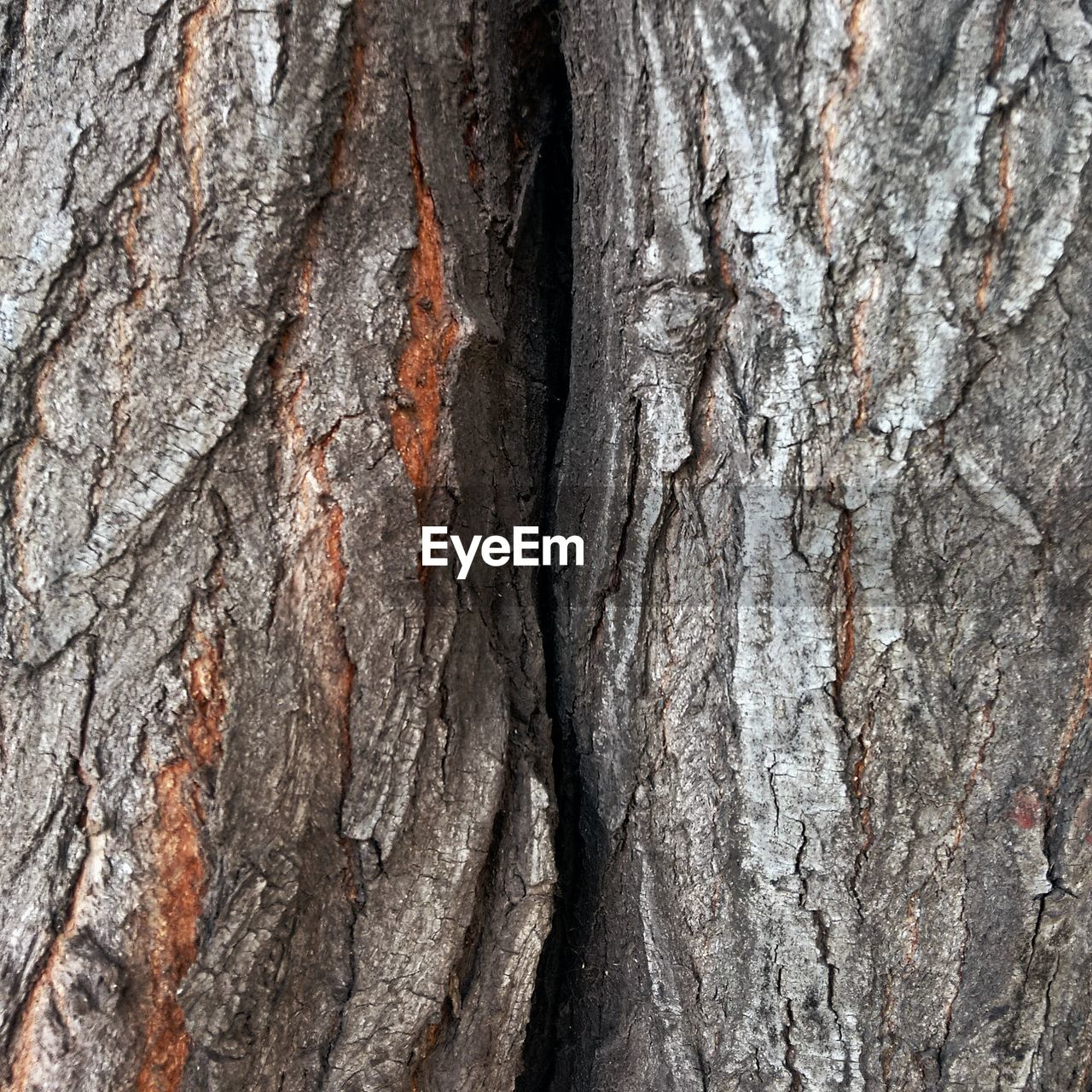 tree trunk, textured, tree, rough, close-up, full frame, wood - material, bark, backgrounds, no people, nature, day, outdoors