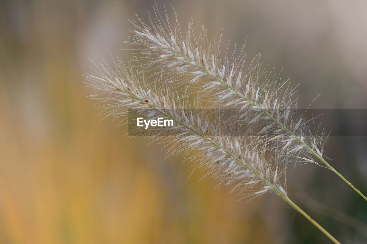 growth, close-up, plant, beauty in nature, focus on foreground, selective focus, no people, nature, day, tranquility, fragility, vulnerability, outdoors, green color, leaf, plant part, plant stem, freshness, botany, flower, spiky