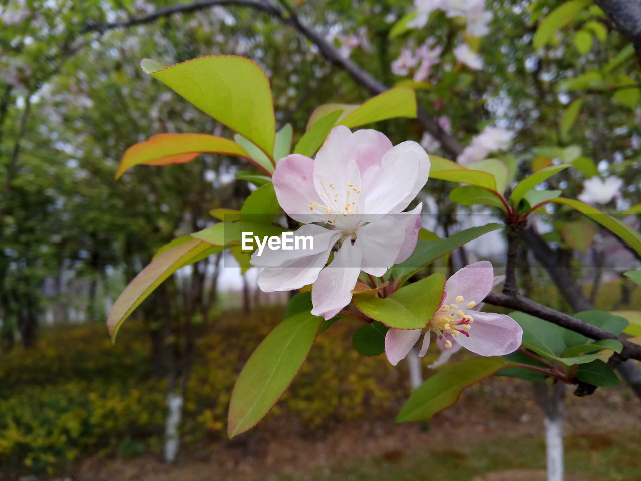 flower, fragility, growth, petal, beauty in nature, nature, freshness, flower head, blossom, tree, springtime, no people, botany, branch, stamen, close-up, leaf, day, blooming, outdoors