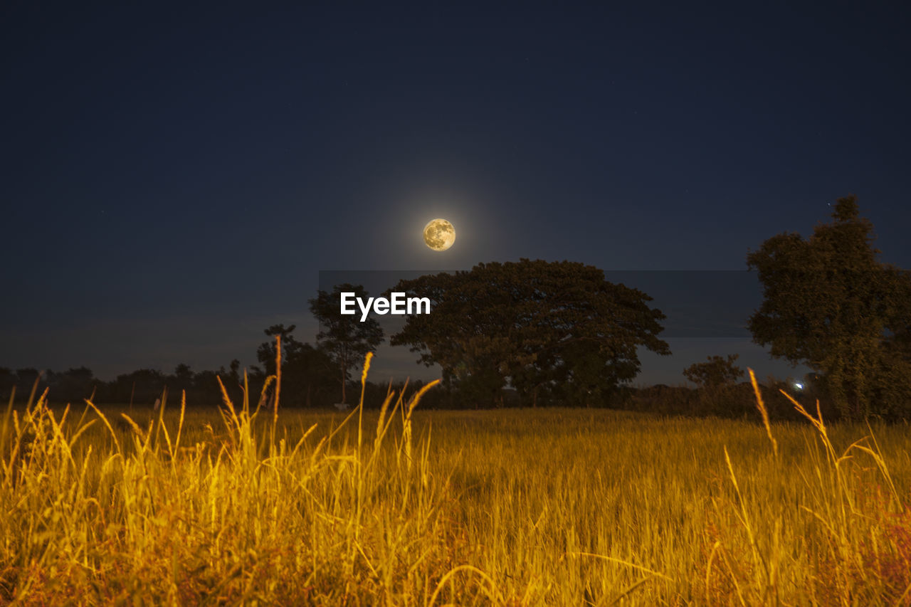 plant, sky, moon, night, field, growth, tranquility, scenics - nature, beauty in nature, land, nature, tranquil scene, tree, landscape, no people, environment, full moon, astronomy, grass, clear sky, outdoors, moonlight, planetary moon