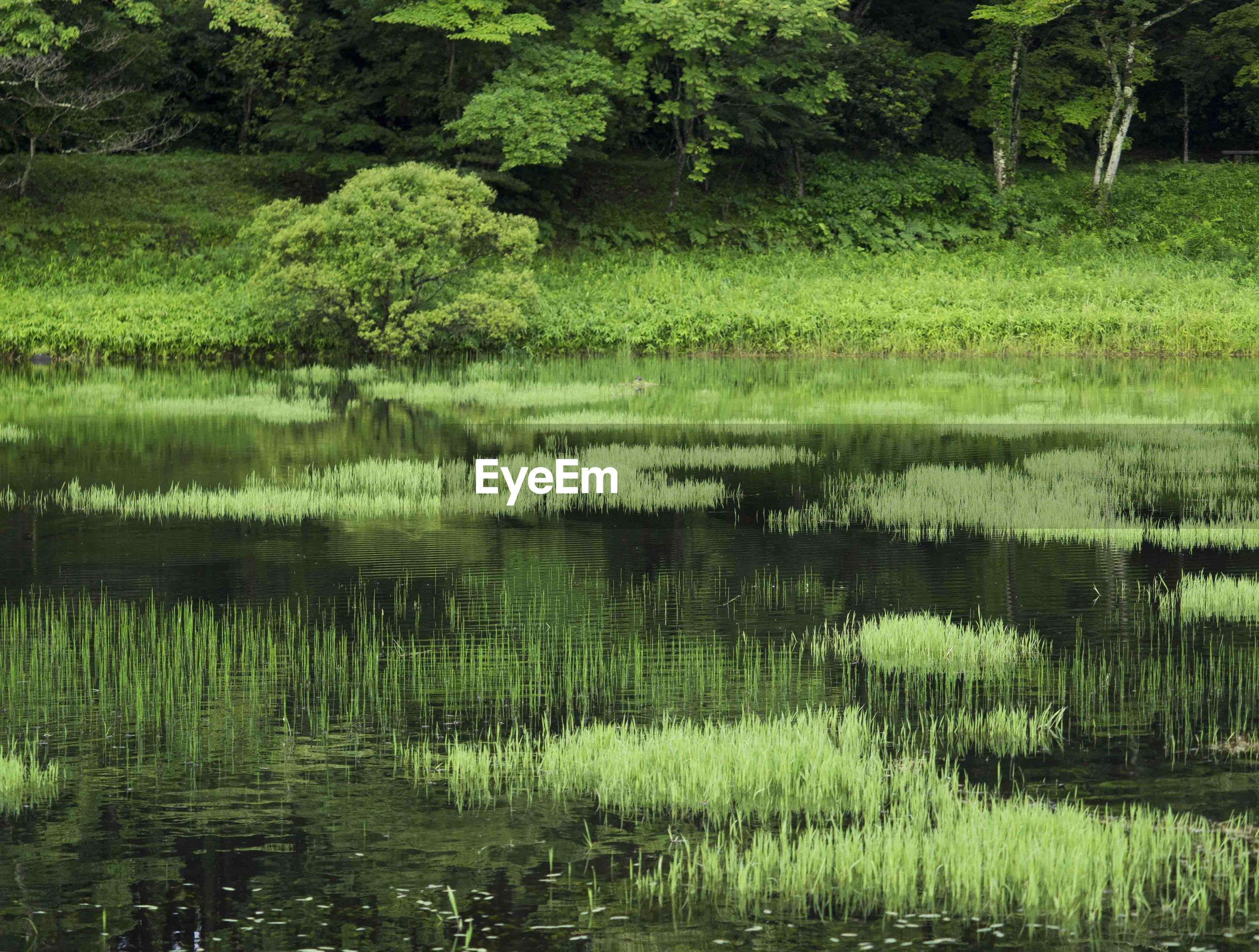 reflection, nature, lake, green, water, tranquility, outdoors, forest, no people, day, grass, beauty in nature