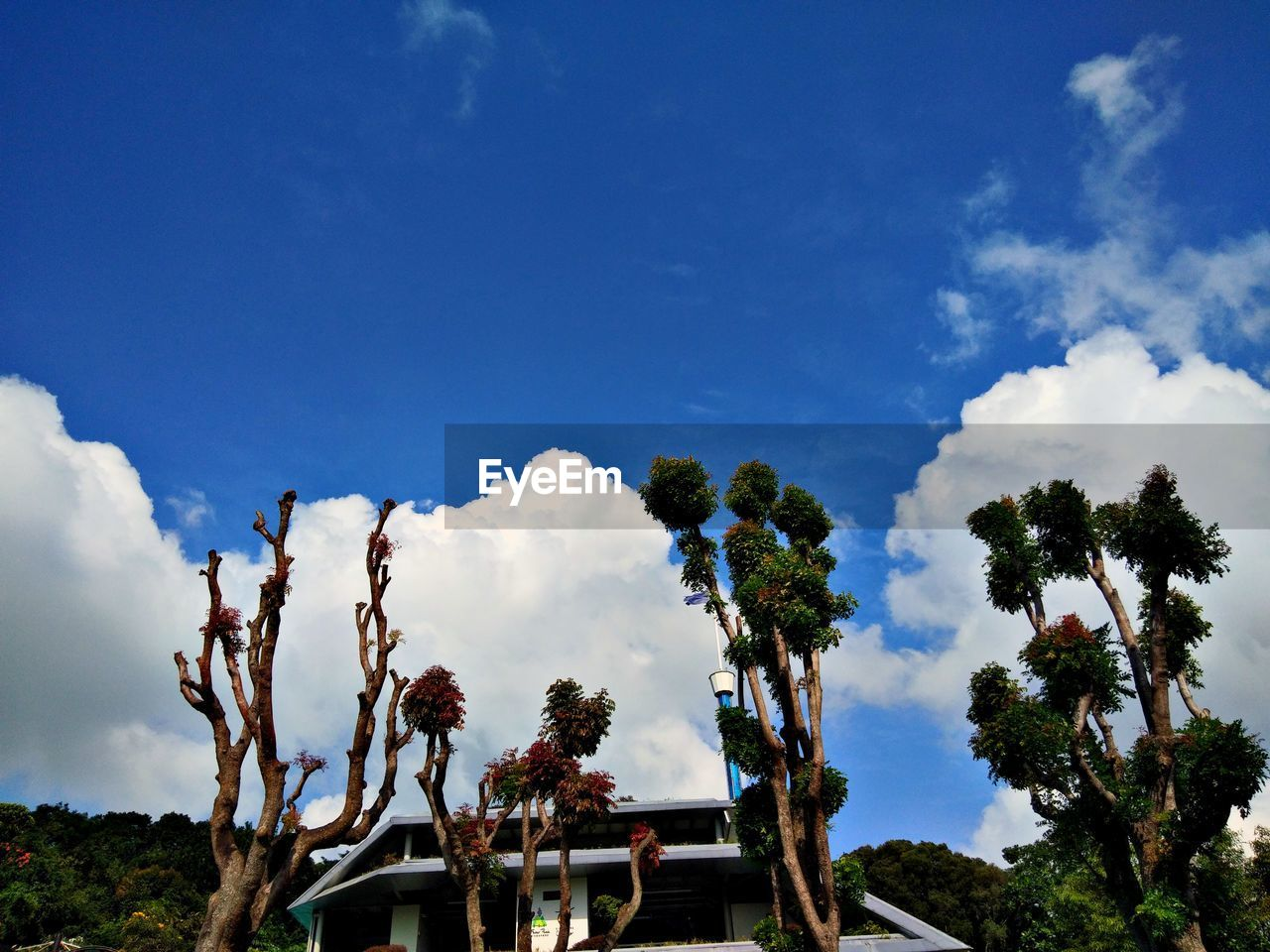 sky, cloud - sky, plant, tree, blue, nature, day, no people, beauty in nature, growth, tranquility, scenics - nature, low angle view, outdoors, transportation, land, tranquil scene, mode of transportation, land vehicle, environment