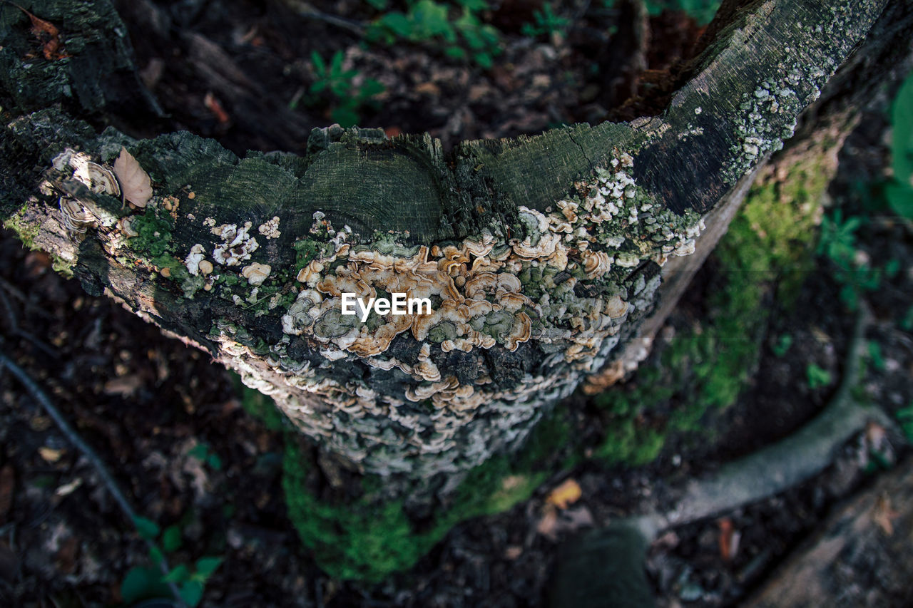 tree, plant, no people, growth, day, forest, tree trunk, trunk, nature, fungus, close-up, high angle view, land, selective focus, wood - material, moss, mushroom, bark, tree stump, outdoors, wood, tree ring, lichen