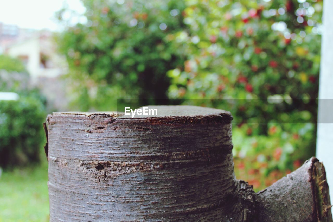focus on foreground, day, outdoors, no people, nature, wood - material, close-up, tree