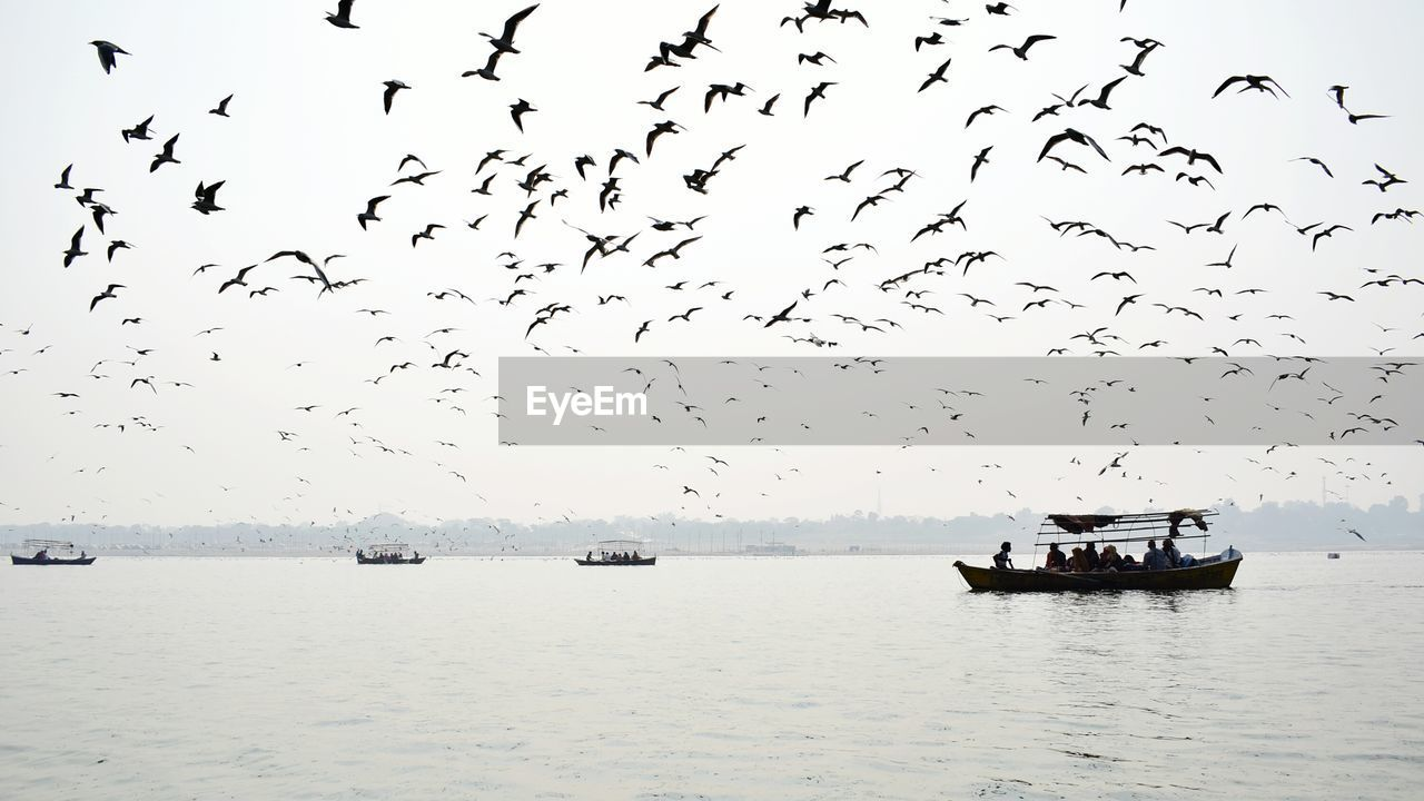 large group of animals, flock of birds, bird, flying, animal themes, animals in the wild, nature, water, beauty in nature, nautical vessel, migrating, sky, animal wildlife, outdoors, transportation, scenics, mode of transport, no people, river, togetherness, day