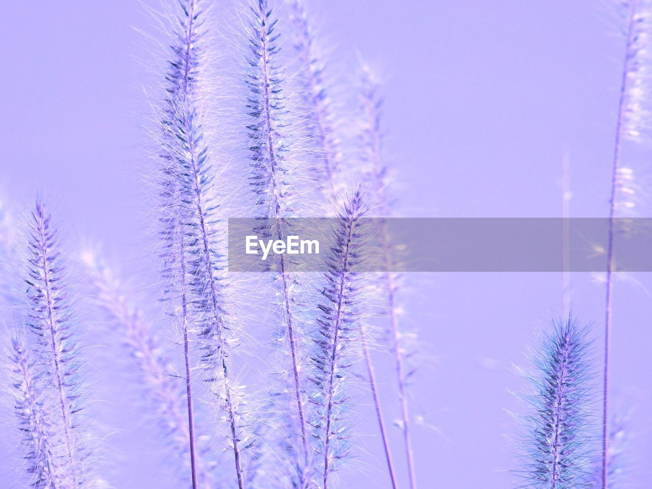nature, beauty in nature, growth, no people, tranquility, plant, day, fragility, outdoors, tranquil scene, close-up, winter, flower, freshness, cold temperature, sky, tree