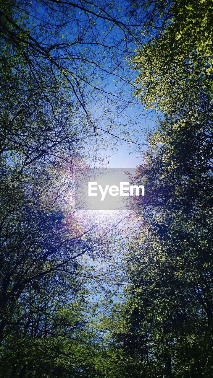 tree, plant, sky, sunlight, beauty in nature, low angle view, nature, growth, sun, tranquility, no people, branch, day, lens flare, sunbeam, forest, outdoors, tranquil scene, scenics - nature, sunny, bright, tree canopy, streaming, directly below, solar flare
