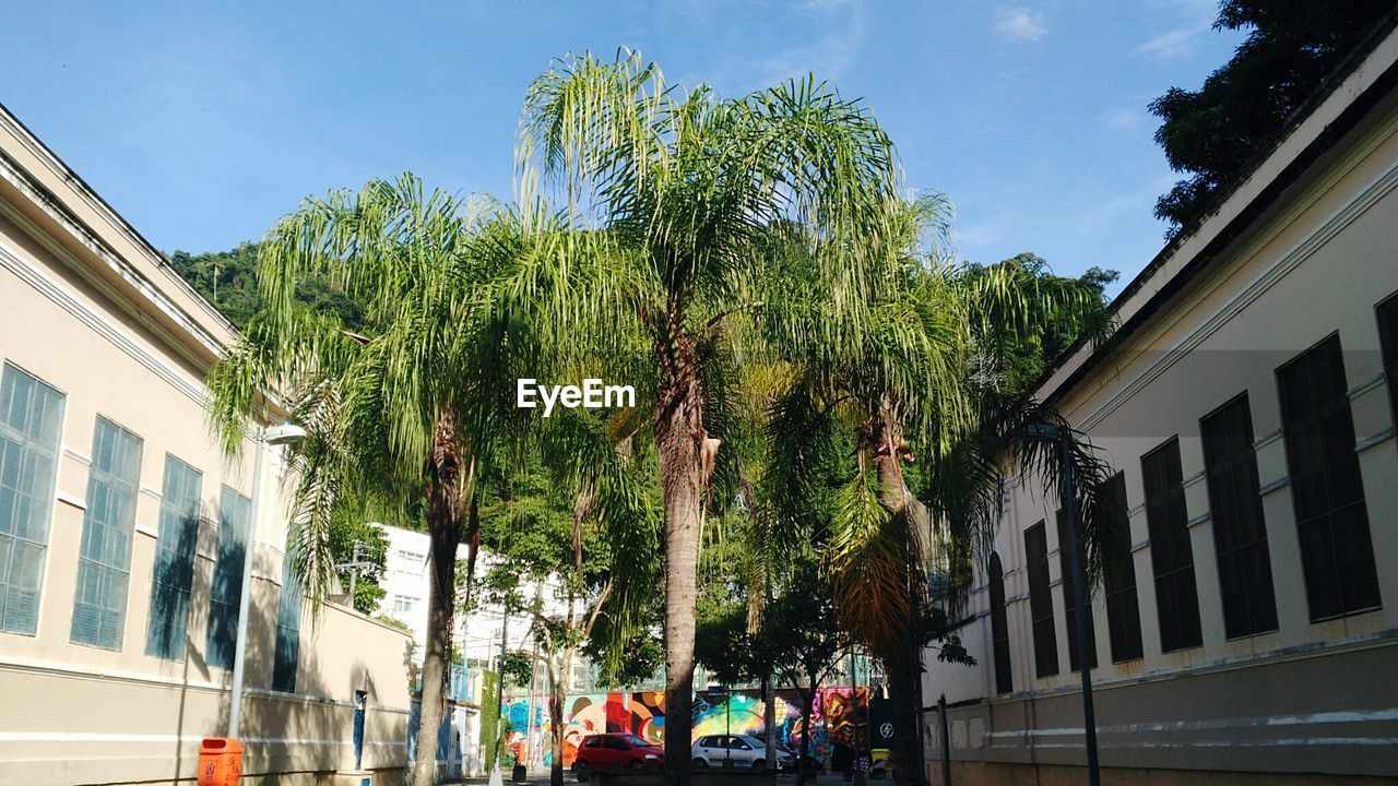 architecture, tree, building exterior, built structure, day, outdoors, growth, low angle view, sky, city, palm tree, nature, no people
