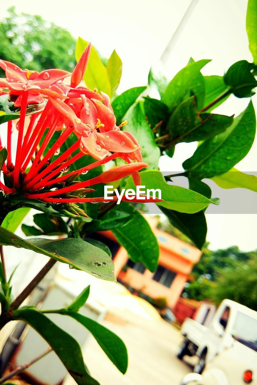 leaf, growth, red, plant, freshness, nature, day, beauty in nature, green color, outdoors, no people, flower, close-up, fragility, flower head, tree