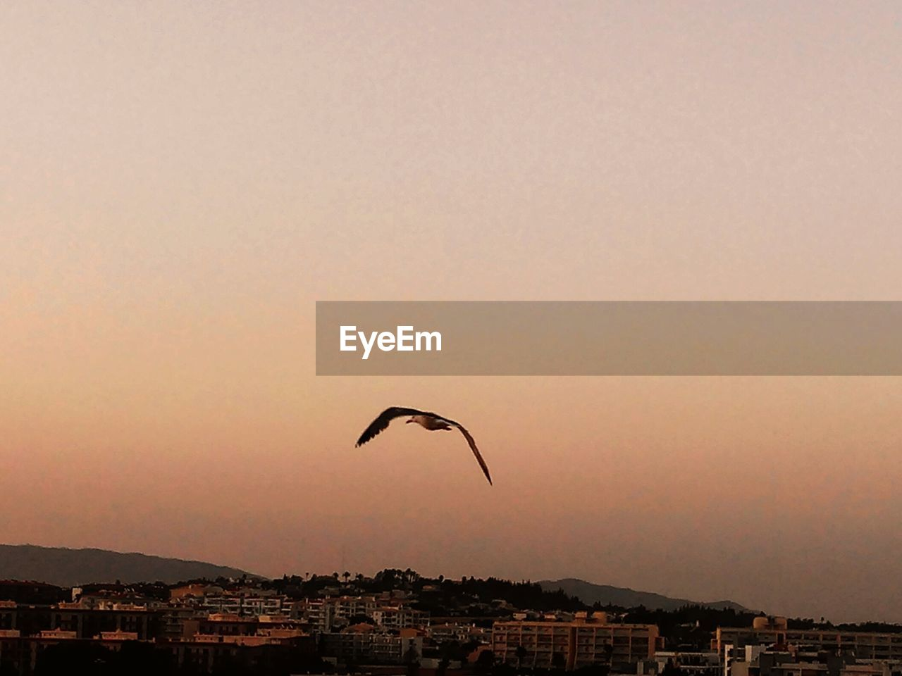 sky, flying, architecture, sunset, city, built structure, mid-air, building exterior, nature, adventure, clear sky, parachute, copy space, cityscape, beauty in nature, outdoors, vertebrate, paragliding, bird, no people