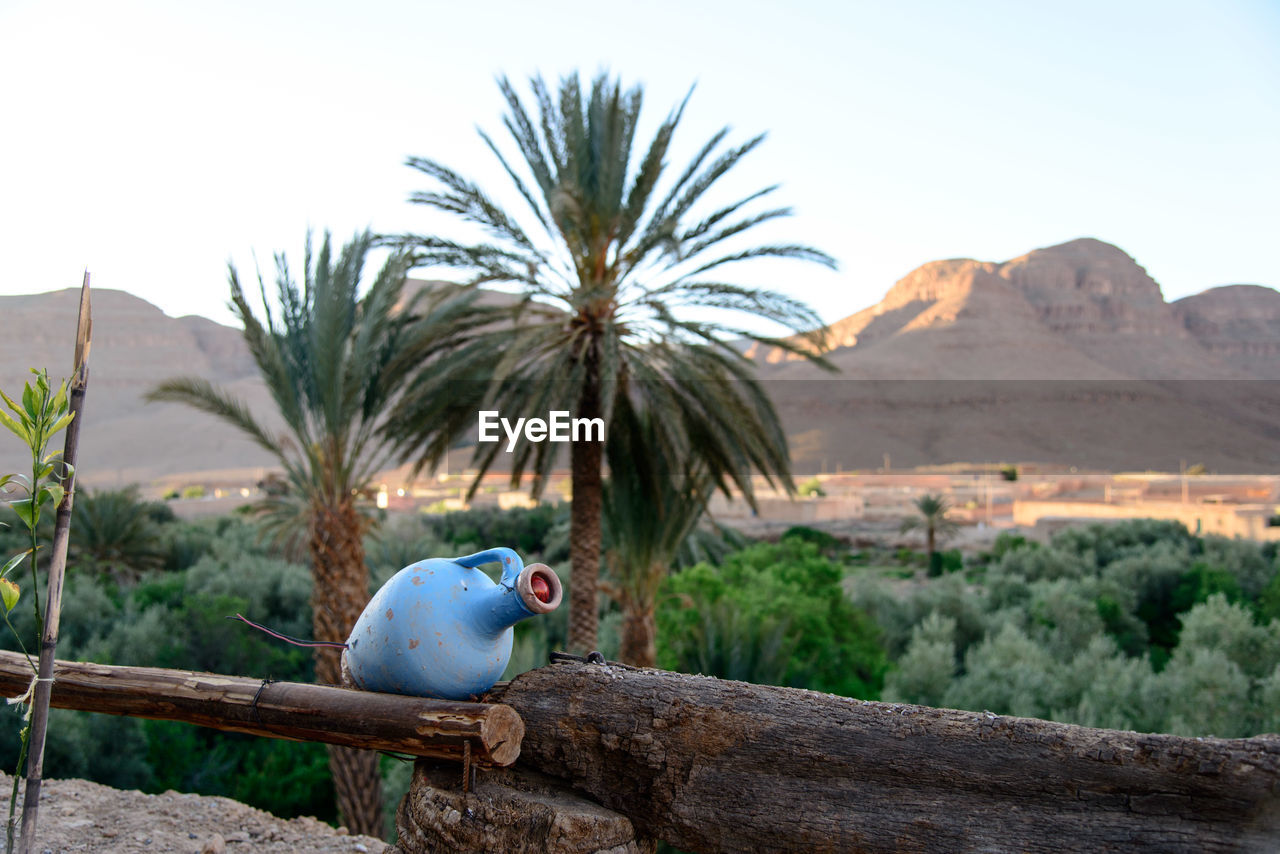 mountain, sky, plant, nature, tree, animal, animal themes, no people, day, palm tree, vertebrate, focus on foreground, one animal, parrot, beauty in nature, scenics - nature, tropical climate, tranquil scene, outdoors, tranquility